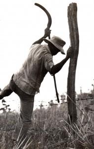 Trabalhadores rurais2