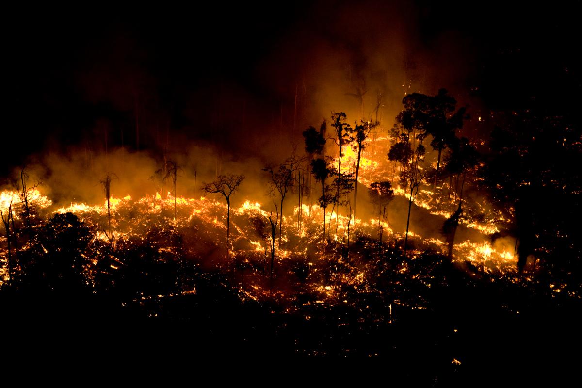 Fórum Ecumênico ACT Brasil sobre situação na Amazônia: Brasil, a Casa Comum em chamas