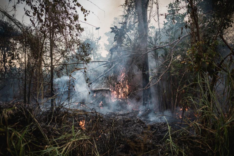 Dia Da Amazônia – La creación gime desde la Amazonia